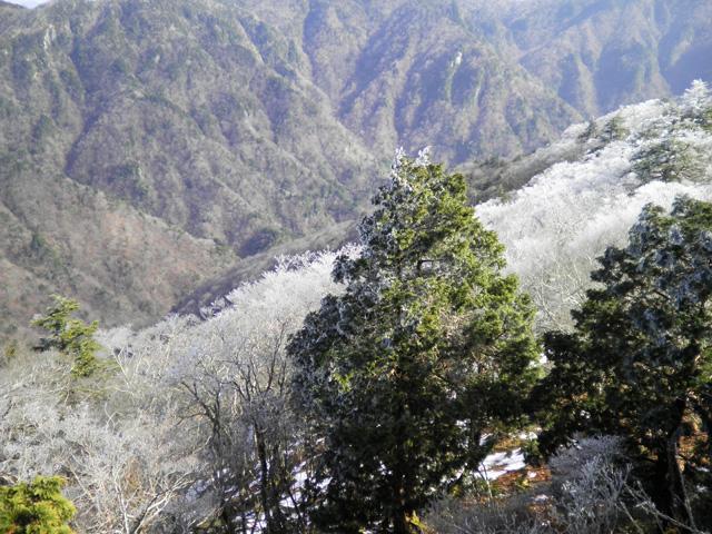 稲村ヶ岳 山頂から眼下霧氷
