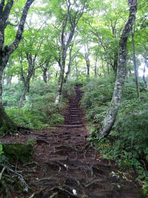 百名山 荒島岳 勝原コース登山道中
