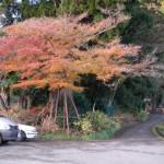 金剛山 奈良川 高天彦神社付近