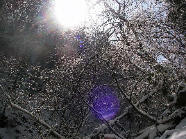 金剛山 霧氷
