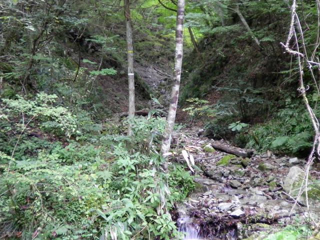 金剛山 モミジ谷 最後の分岐右側