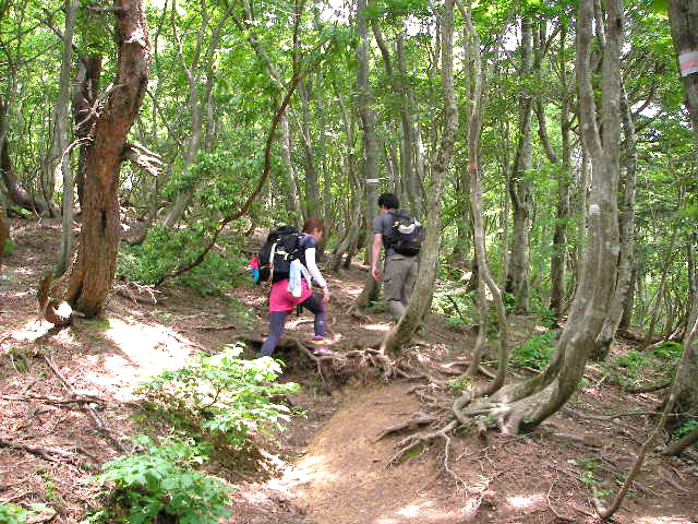 武奈ヶ岳 登山道序盤 急登